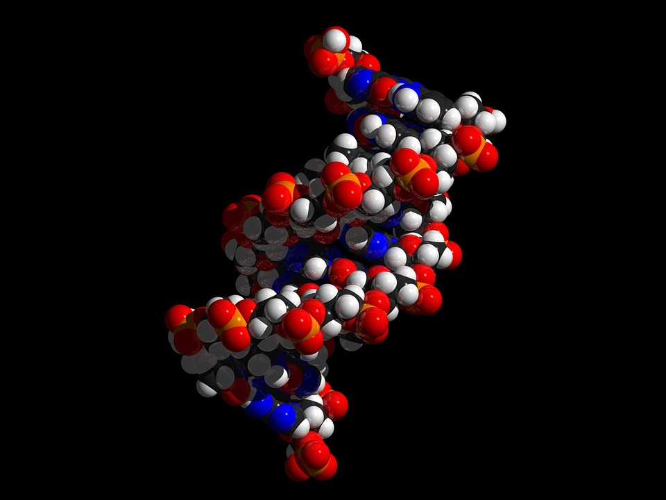 dna double helix model minor groove - NASA Claimed DNA Ingredients Came from Space